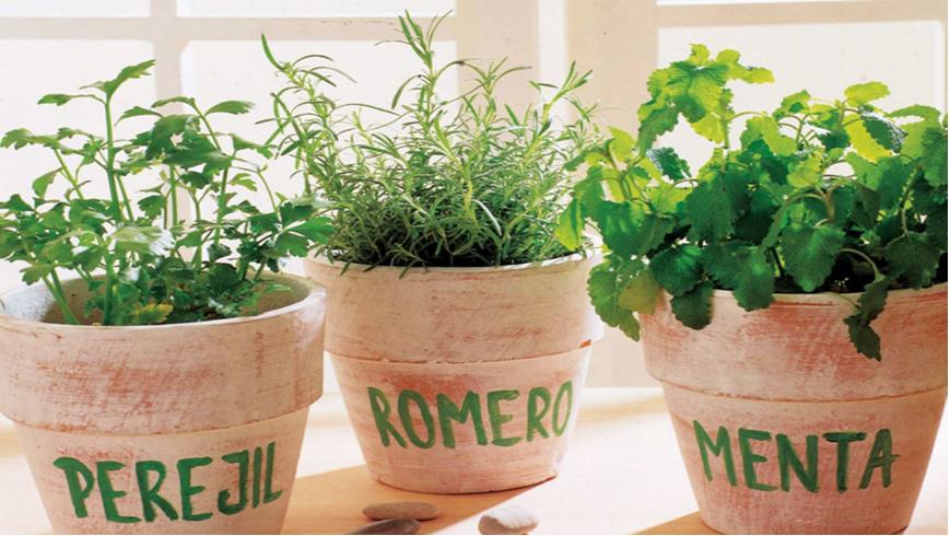 Plantas naturales y aromaticas