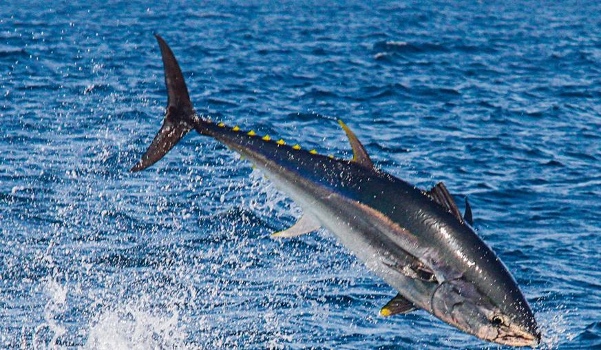 Cetaceos y otros animales marinos