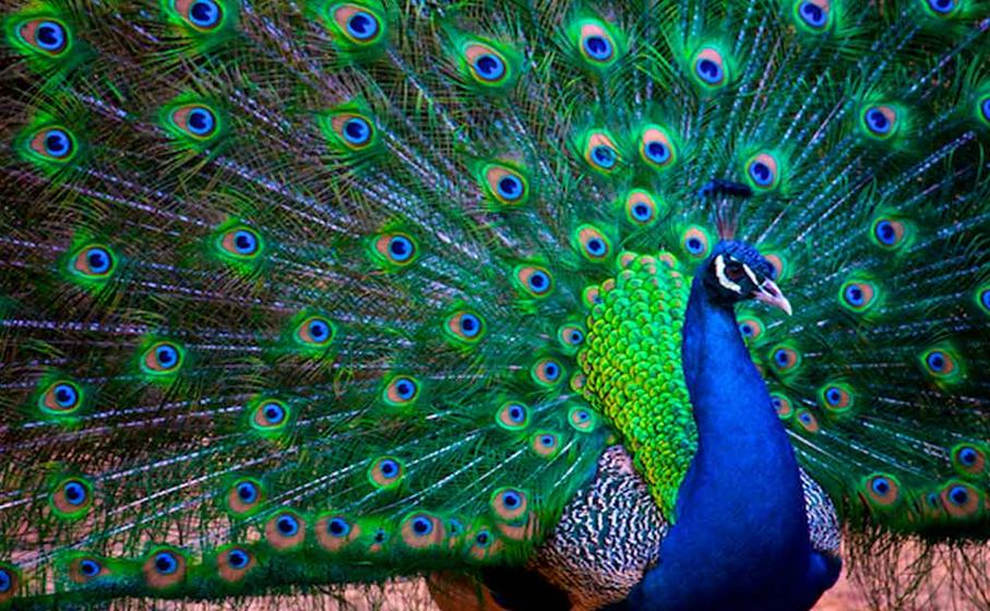Especialistas aves exóticas