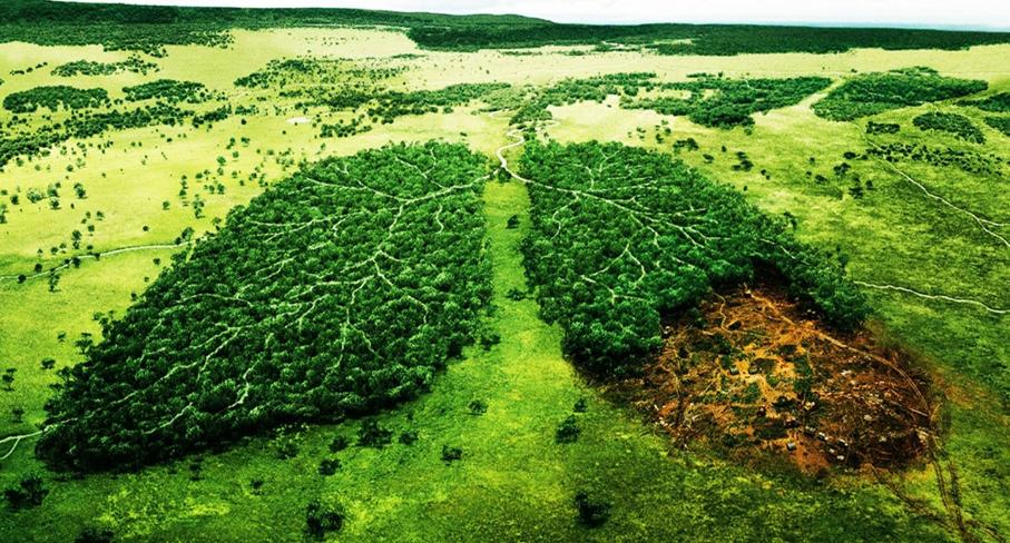 formacion medio ambiente